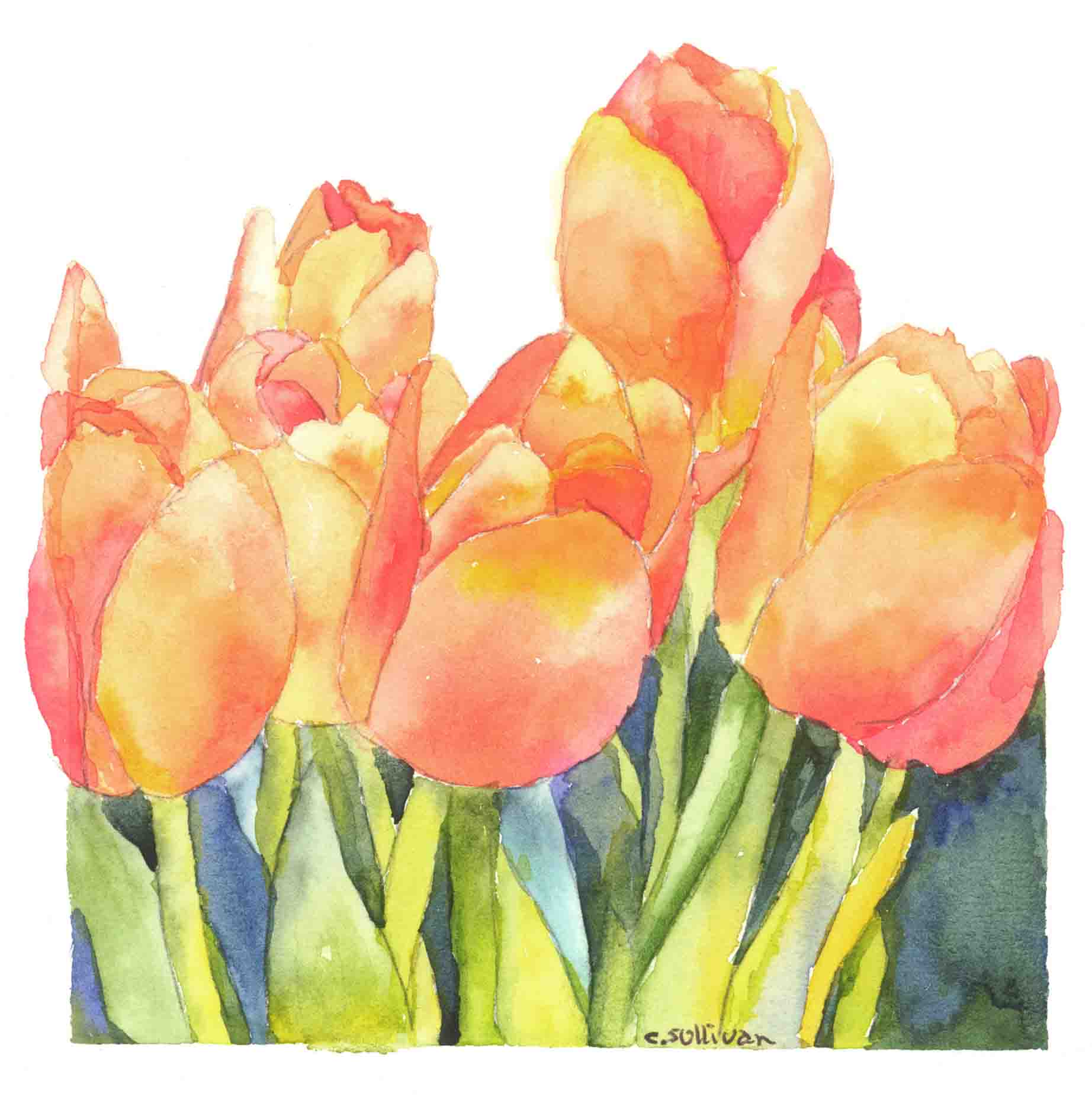 cs.2 orange tulips